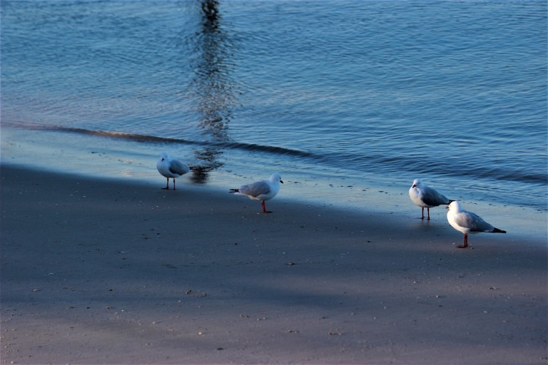 IMG_2064Seagulls Gathering On the Beach.jpg
